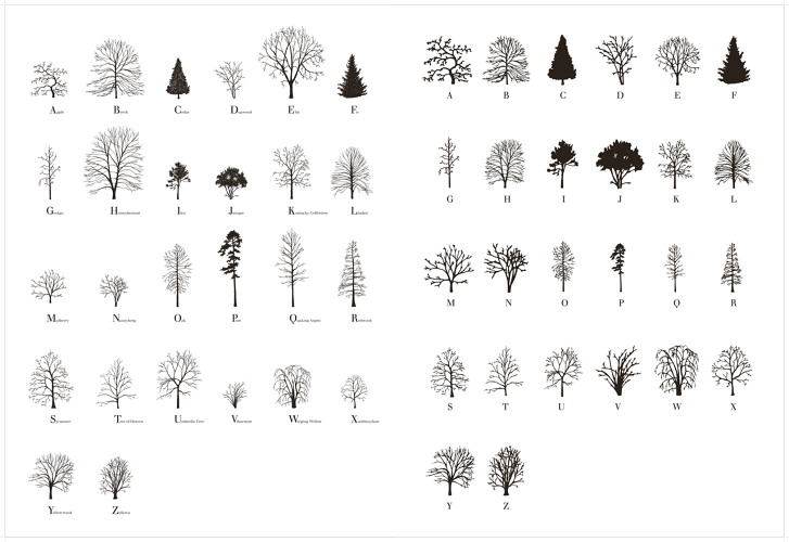 3050508-slide-s-0-how-an-artist-created-a-typeface-out-of-trees